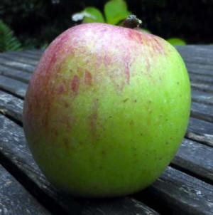 Apfel unbekannter alter Sorte