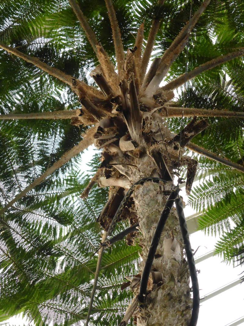 Palme aus fernen Ländern