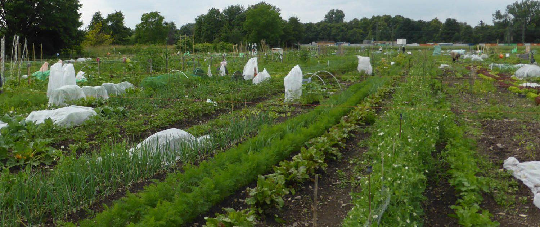Krautgärten