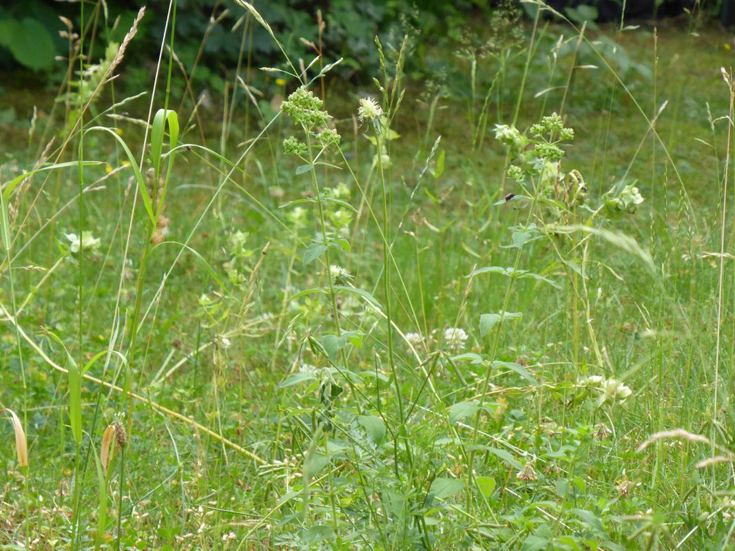 Blumenwiese im Juli
