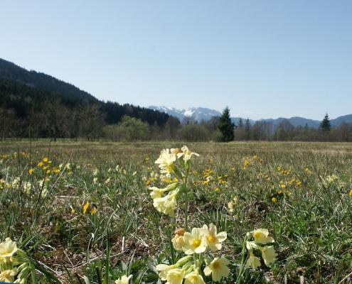 Moor im Frühling